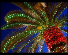 "National Celebrations Committee Hosts ""Christmas in the Gardens"""