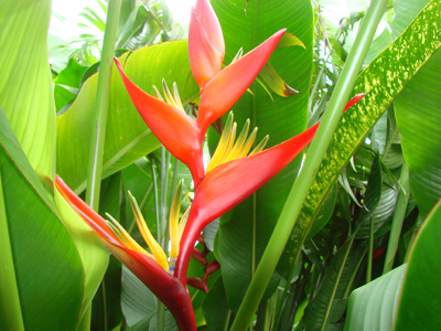 Heliconia Johnson Beharry VC