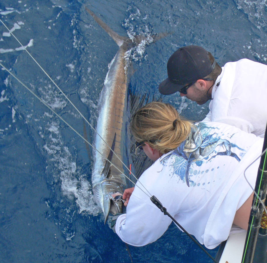 "The sailfish being released on ""Yes Aye"" in January 2013"