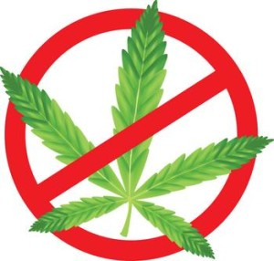 no marijuana drugs