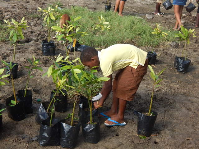 Young man selecting his tree for planting