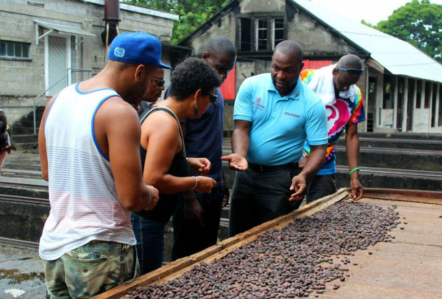 3Nov2015 - Checking on the cocoa beans at Douglaston Estate - Photo by Christine George