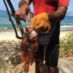 Fighting Back Against Lionfish