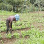 Launch of Grenada Organic Agricultural Movement