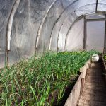 Six climate-smart agriculture initiatives make a difference in Eastern Caribbean States