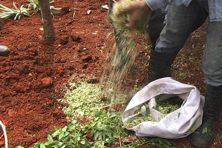 Grenada - Regional Winner/Grenada Organic Agriculture Movement
