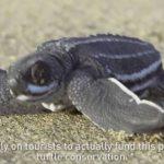 Grenada's Sea Turtles featured on JetBlue Flights